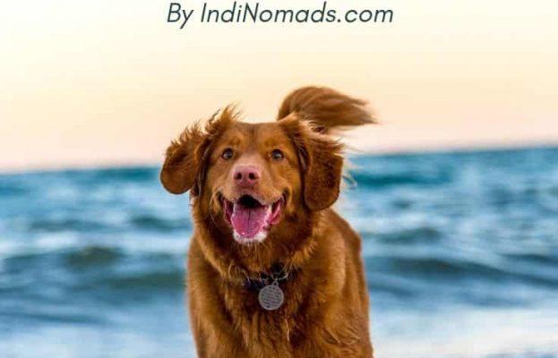 Dog friendly beaches half moon bay