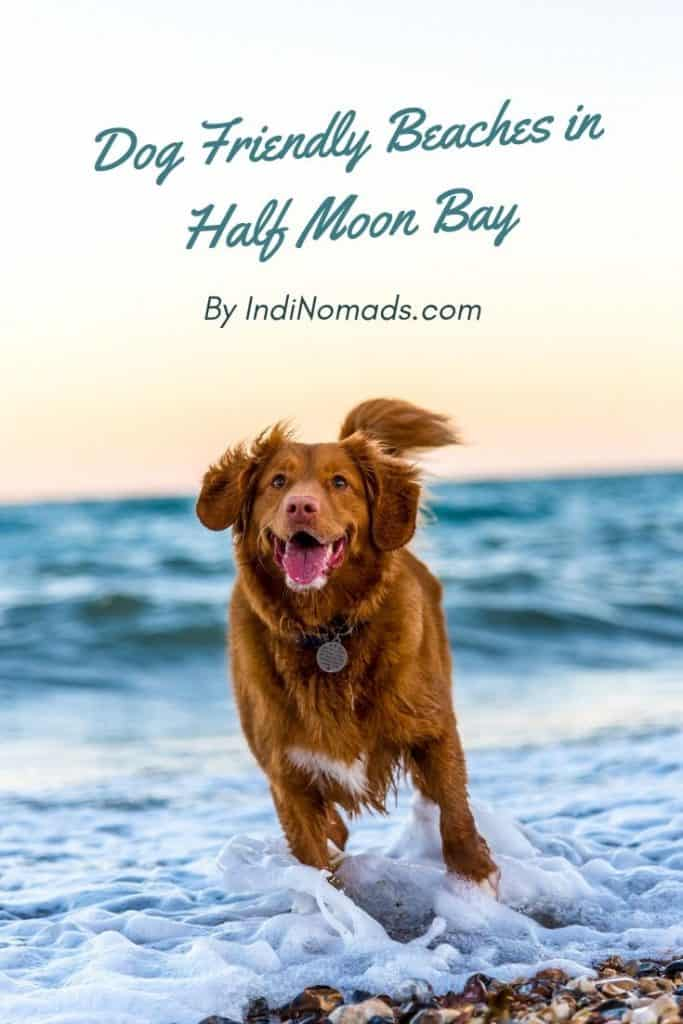 Dog friendly beaches half moon bay