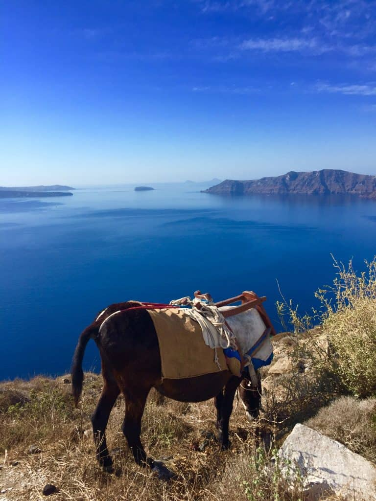 Half Moon Bay Horseback riding
