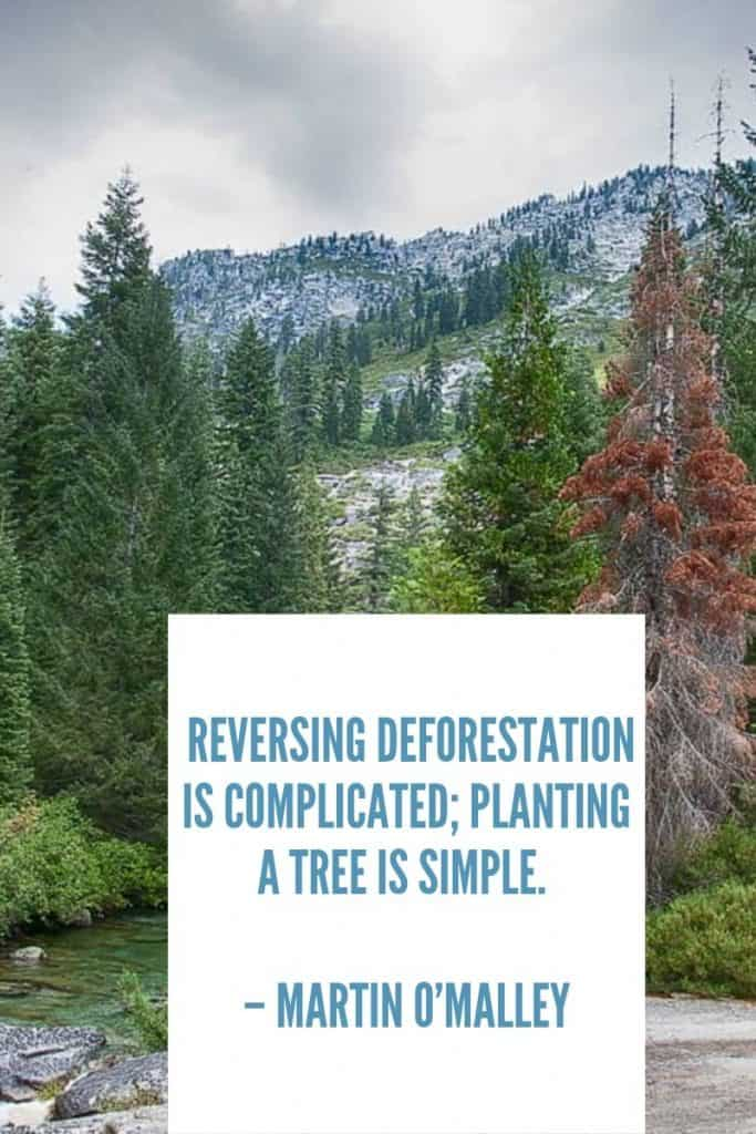 Tree Planting Quotes