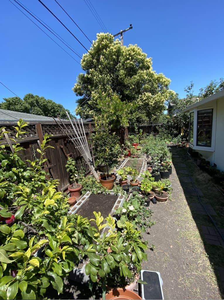 Bay Area Gardening