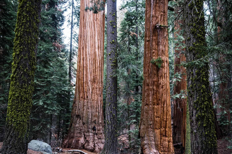 Calaveras Big Trees Hiking