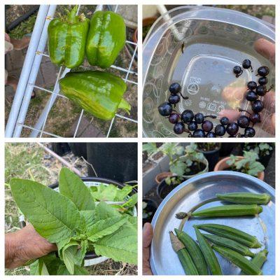 Bay Area Gardening – Welcome To My Backyard Garden